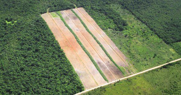 Los países más deforestados del mundo en la actualidad